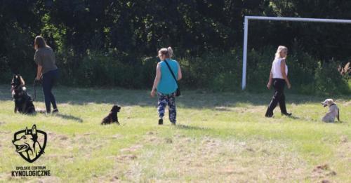 Hoshi w trakcie zajęć z psiego przedszkola