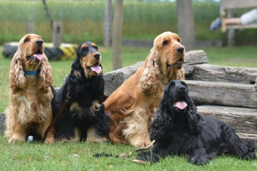 Khaleesi, Taranee, Moody i Freya
