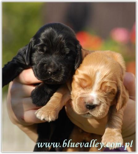 Figaro(po prawej) z rodzeństwem